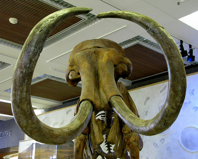 Hebior Farm Mammoth
