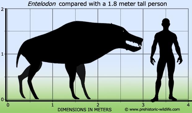 Entelodon-size