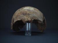Rv2039 skull