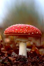 Jesus_cult_mushroom